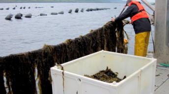 Summer 2015 seaweed harvesting in Scotland
