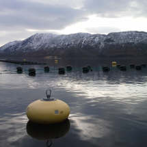 Seaweed rafts at Oldervika site