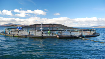 Modelling study indicates IMTA can reduce nitrogen release from salmon farms