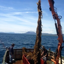 Seaweed Harvest at DOMMRS 3