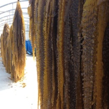 Seaweed harvest at DOMMRS2